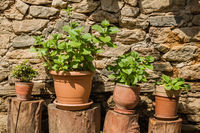 Green Plants in Flower Pots in front of Stone Wall