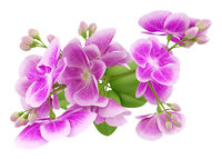 top view of purple orchid flower isolated on white background