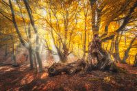 Magical old trees with sun rays at sunrise in fall. Autumn colors