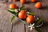 Tangelos on a metal tray with leaves and orange blossoms on a rustic wood background