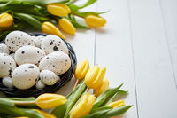 Beautiful yellow tulips with dotted quail and chicken eggs in nest on white