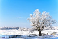 landscape in winter in Masuria