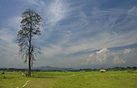 Landscape view of fields at Assam, Arunachal Pradesh Border, Assam, India.