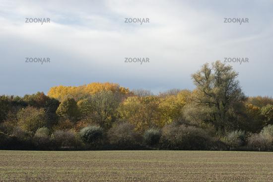 Explosion der Farben... Latumer Bruch *Meerbusch* im Herbst