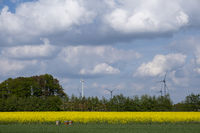 Rapsfeld, Windraeder und Bienenstoecke