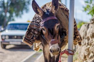 Donkey next to Lada taxi, Armenia