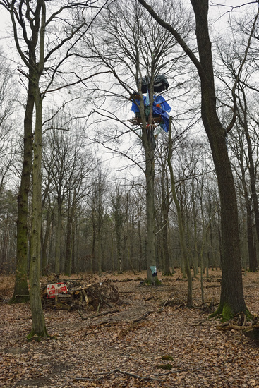 La Chispa... Hambacher Forst *Nordrhein-Westfalen*