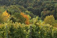 Herbstliche Landschaft