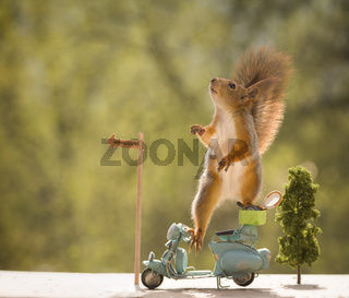 red squirrels on a motorbike with a Tennis Racket