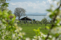 Landscape Fraueninsel Chiemsee