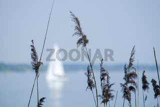 Chiemsee with boat