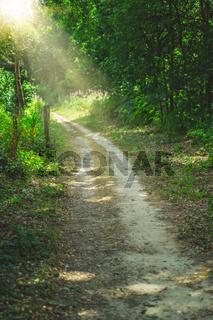 Path through Banstead woods in summer