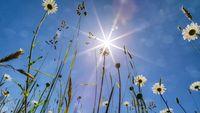 Daisies Under the Sun
