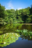 Yoyogi park pond, Tokyo, Japan