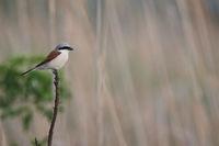 Hungary Birds