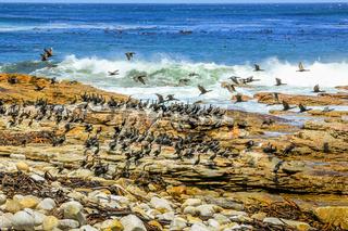 Sea bird Atlantic Coast