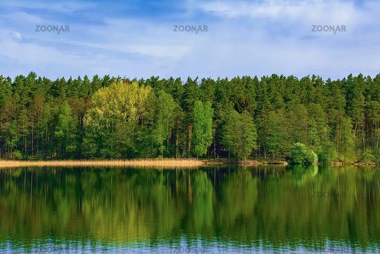 Forest by the lake