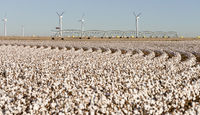 Texas Cotton Filed Textile Agriculture Green Energy Wind Turbines