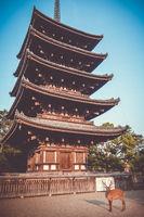 Deer in front of kofuku-ji temple pagoda, Nara, Japan
