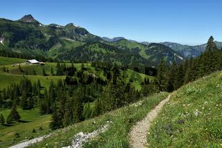 Kanisalpe im Bregenzerwald bei Mellau; Blick zur Wurzachalpe; Damülser Mittagsspitze;