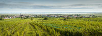 Neusiedlersee village of Rust am See with vineyards and lake in Austria
