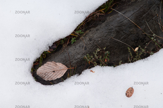 Frozen ground. Ordesa and Monte Perdido National Park. Pyrenees. Huesca. Aragon. Spain.