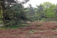 Westruper-Heide