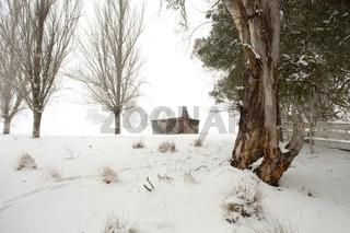 Rural winter scenic landscape near Oberon