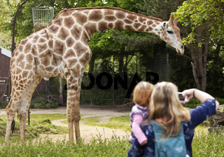 DO_Zoo_07.tif