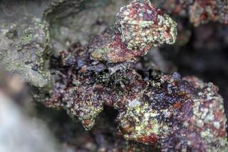 Felsen am Strand von Nordspanien