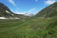 Schönes Hochmoor mit blühendem Wollgras bei Prettau, Wanderweg Richtung Lenkjochlhütte, Südtirol