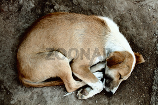 Stray dog on pavement, top view
