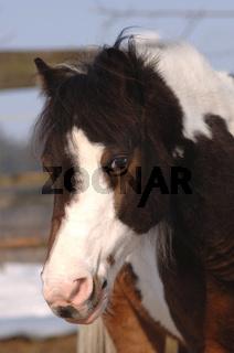 Schwarz weisses Pony