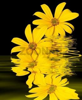 Gelb und Schwarz