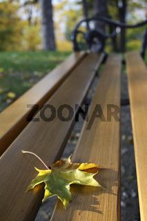 Herbstbild auf Bank