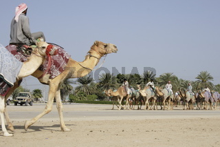 two camel caravans are meeting, Dubai, Emirate