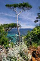 Trees and vegetation near the sea.