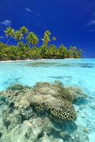 brain coral @ secret beach.jpg