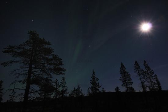 Vollmond scheint ueber einem Sumpf bei Gaellivare, Lappland