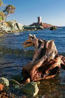 Tree trunck in the sea.