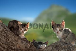 Hauskatze, Hauskaetzchen, Domestic Cat, Pet, Pets, Felis Catus