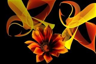 Traum in Orange