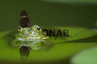 Frosch mit Besuch