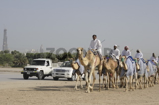 camel caravan at raodside,  Dubai, Emirate