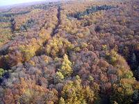 Vogelperspektive Wald im Herbst