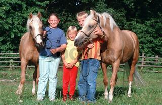 Welsh Cob Pony