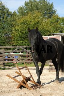 Pura Raza Espanola / Andalusier / Andalusian Horse
