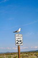 Mono Lake Kalifornien USA