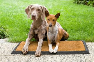 Zwei Hunde auf der Matte