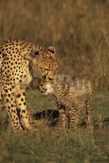 Masai-Mara Wildschutzgebiet